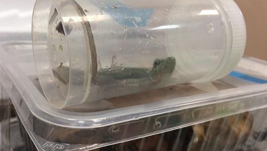 163 конфискованные рептилии иамфибии переданы Екатеринбургскому зоопарку